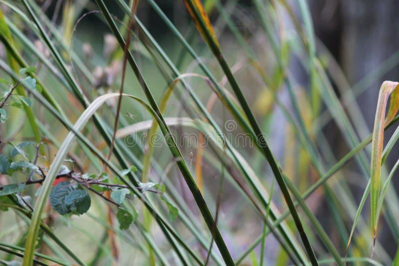 Gräser im englischen Garten, Nahaufnahme, mit Lavendel und kleinen flowes 3 lizenzfreies stockbild