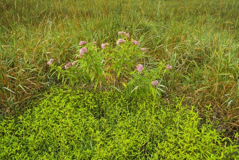Gräser und groundcover auf dem Gebiet stockfotografie