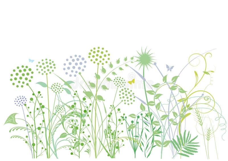 Gräser und Kräuter stock abbildung