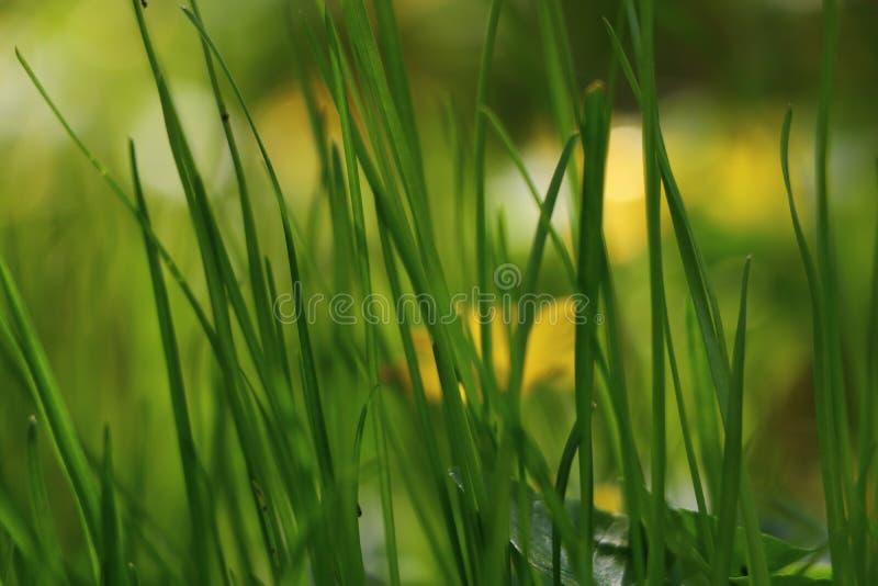 Gräset är gräsplan, solen är glänsande, källan fotografering för bildbyråer