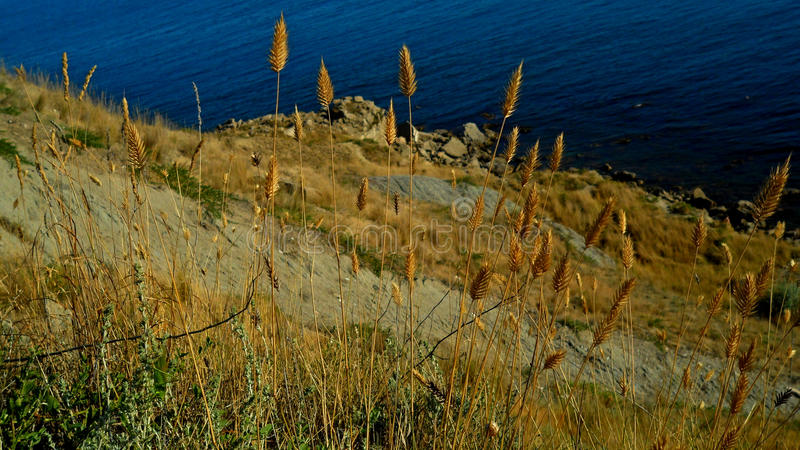 Gräset av havet royaltyfri foto