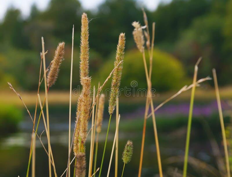 Gräset i skogen royaltyfri foto