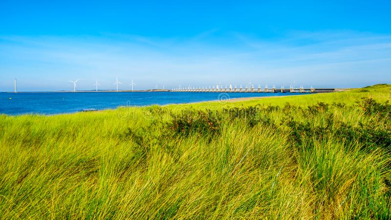 Gräset täckte dyn längs den Oosterschelde vattenvägen fotografering för bildbyråer