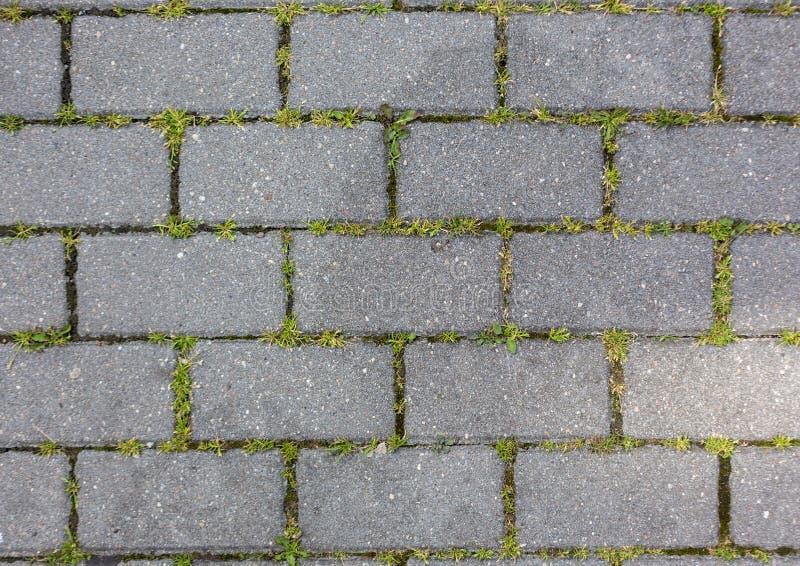 Gräset växer till och med för modelltextur för den konkreta tegelplattan bakgrunden royaltyfria foton