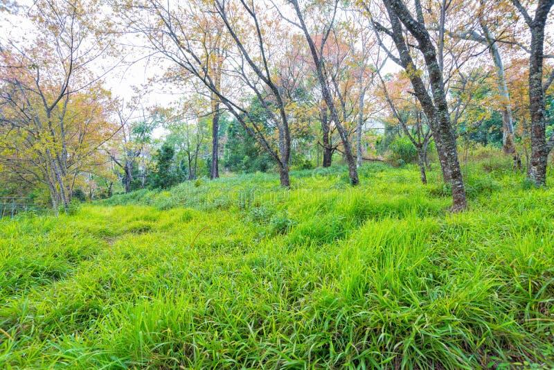 Gräsfält med trädet i skog royaltyfri foto