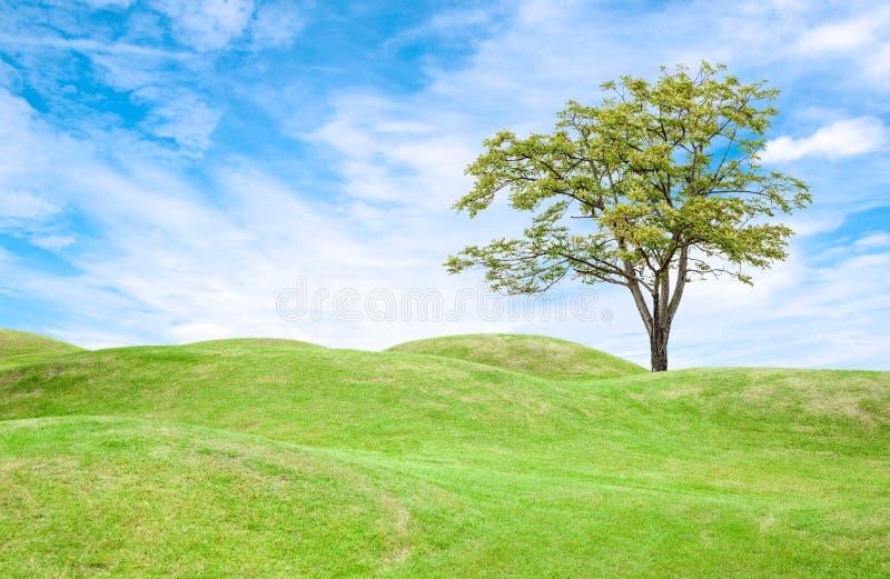 Gräsfält och träd under blå himmel arkivfoto