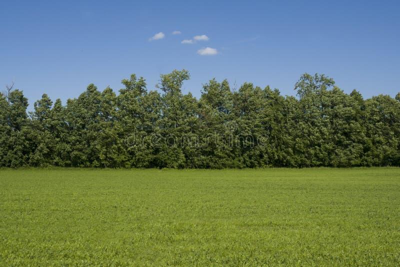Gräsfältet och träd landskap utanför staden royaltyfri foto
