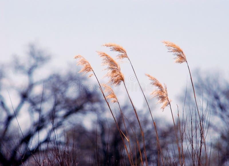 gräsflod royaltyfria foton