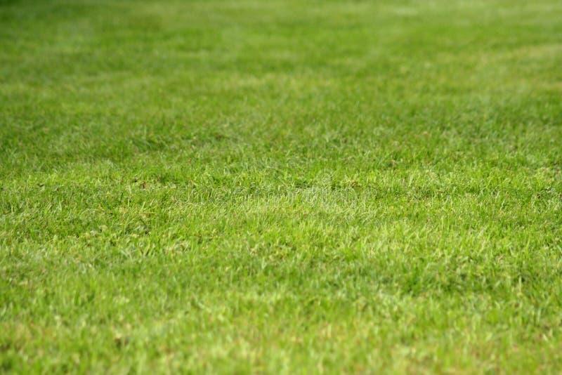 gräsgreen arkivfoton