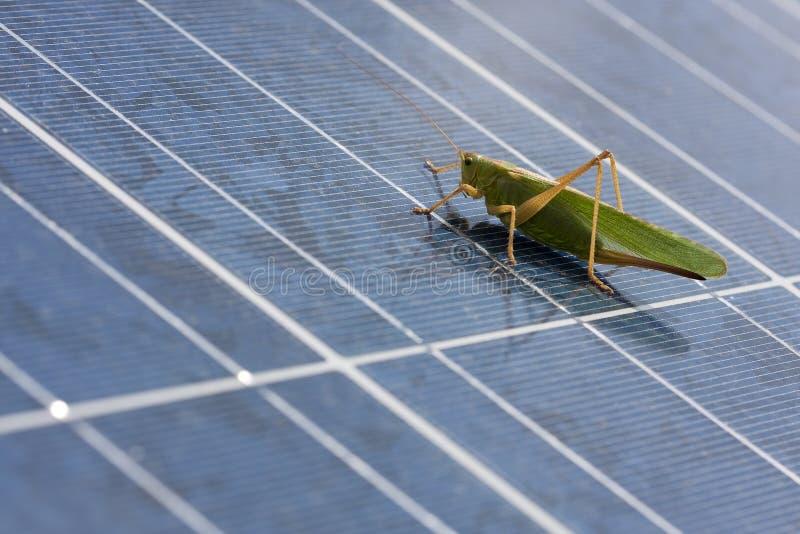 Gräshoppa till den photovoltaic panelen 库存图片