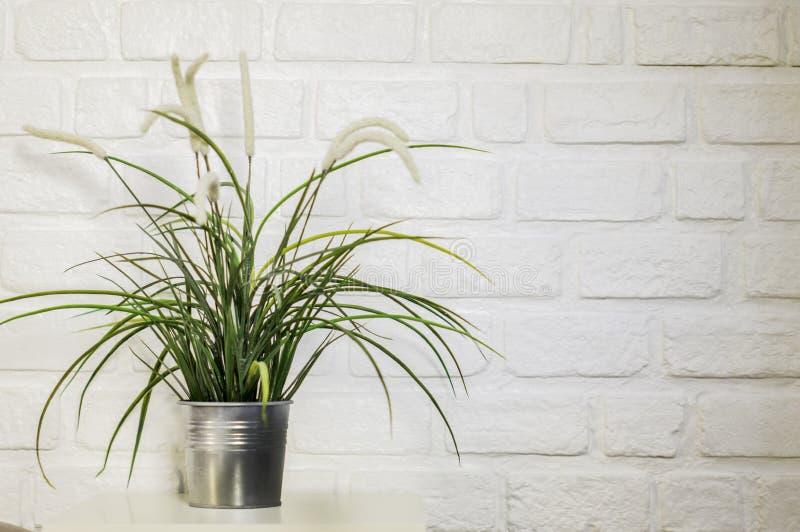 Gräskruka att dekorera huset beautifully, vit tegelstenvägg för ställe, wi arkivfoton