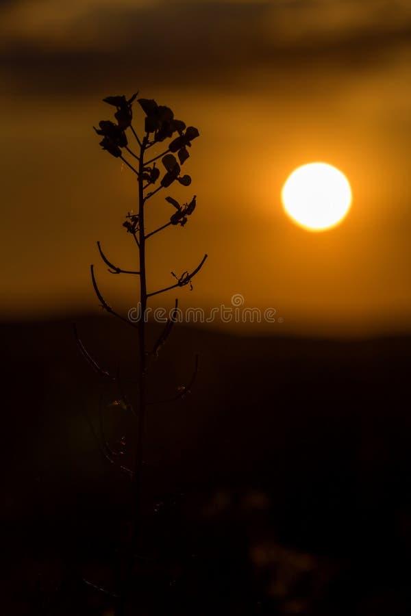 Gräslandskap i det underbara solnedgångljuset arkivfoton