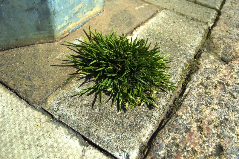 Gräslapp till och med trottoarsprickan arkivbild