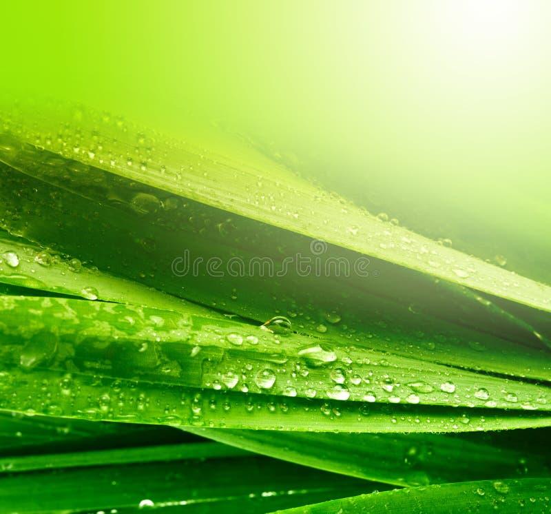 Gräsleaf med vattendroppar royaltyfria foton