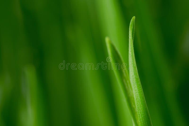 gräsmakro royaltyfria bilder