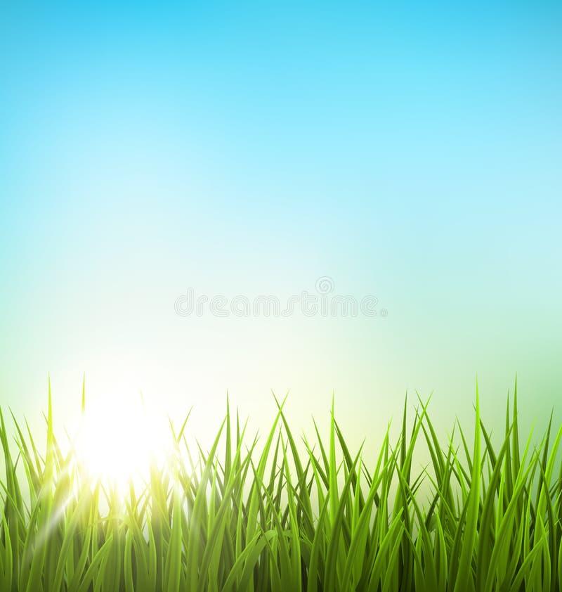 Gräsmatta för grönt gräs med soluppgång på blå himmel Blom- naturvår stock illustrationer