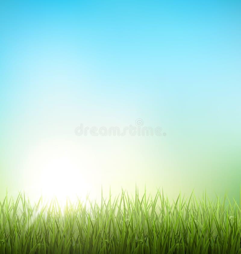 Gräsmatta för grönt gräs med soluppgång på himmel Blom- naturvårbackg royaltyfri illustrationer