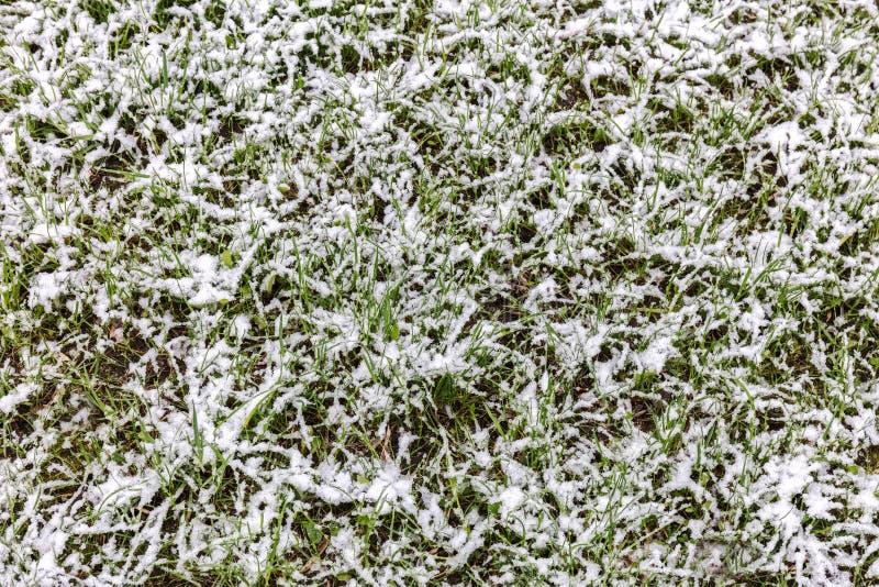 Gräsmatta för grönt gräs under snö höstbakgrundscloseupen colors orange red för murgrönaleaf fotografering för bildbyråer