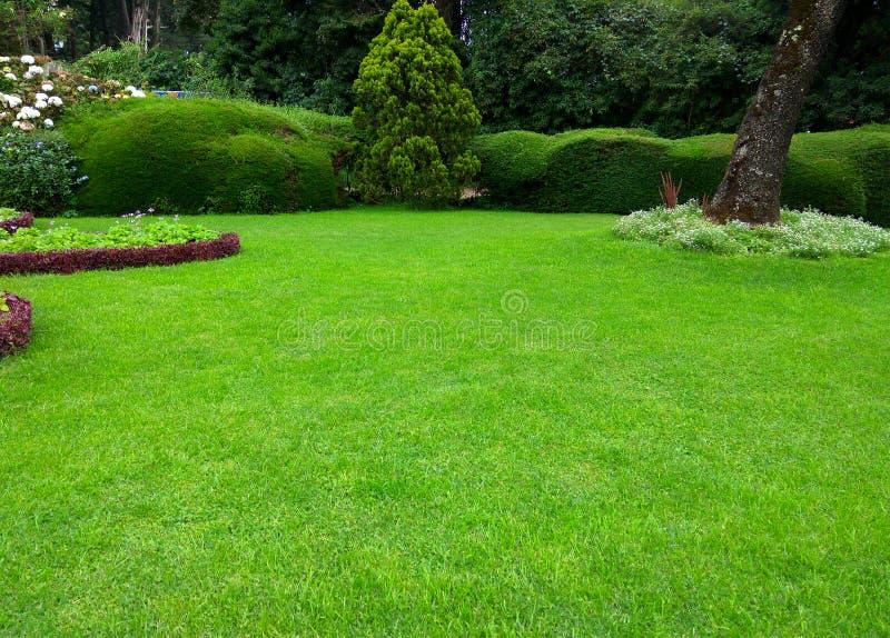 Gräsmatta härlig trädgård för grönt gräs arkivbilder