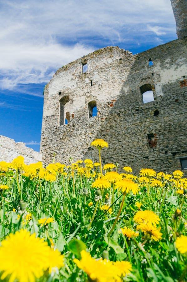 Gräsmatta med blomningmaskrosor mot medeltida slott royaltyfria foton