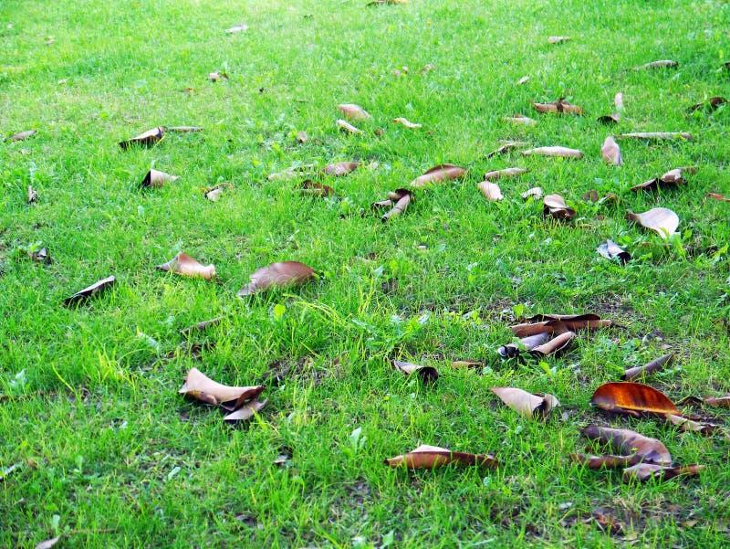 Gräsmatta och sidor i vinter i trädgården arkivfoton