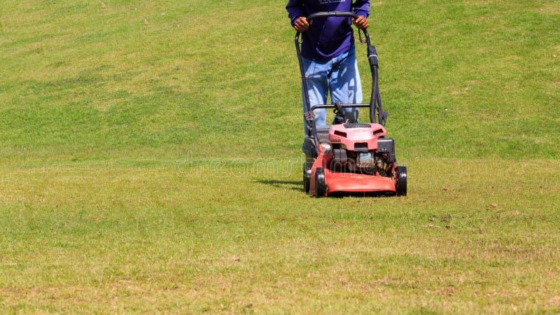 Gräsmattaflyttkarl Trädgårdsmästare som mejar grön gräsmatta fotografering för bildbyråer
