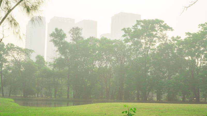 Gräsmattagården för grönt gräs och gröna sidaträd som bygger på bakgrund under misten och den molniga himlen som täcker, parkerar arkivbild