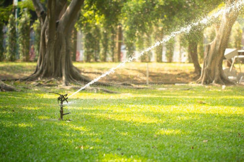 Gräsmattaspridare som bevattnar gräs i trädgård under solljus arkivbild