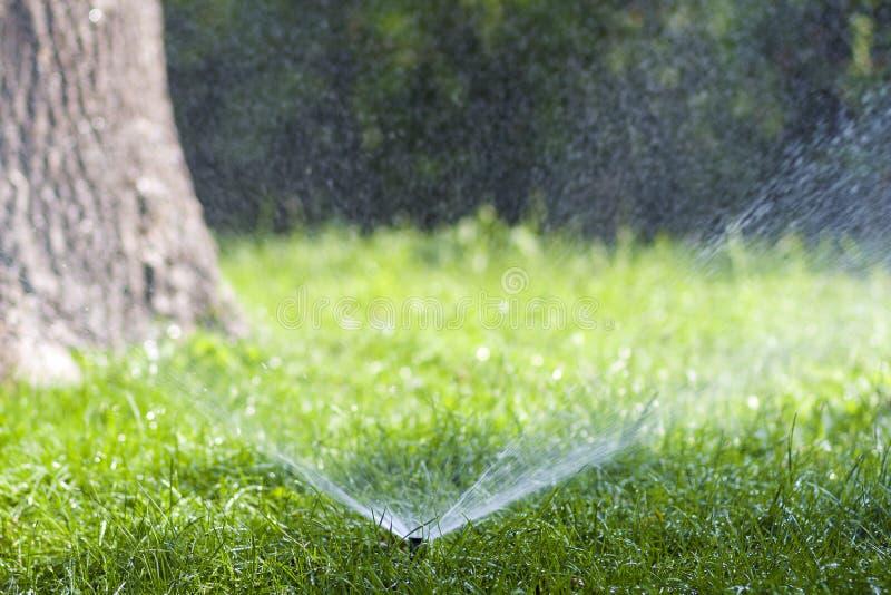 Gräsmattavattenspridare som besprutar vatten över gräs i trädgård på en varm sommardag Automatiska bevattna gräsmattor Arbeta i t royaltyfri fotografi