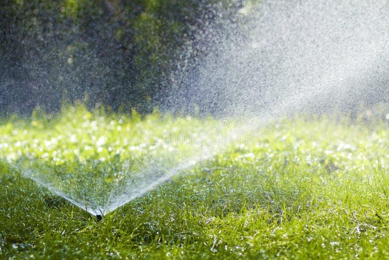 Gräsmattavattenspridare som besprutar vatten över gräs i trädgård på en varm sommardag Automatiska bevattna gräsmattor Arbeta i t royaltyfri bild