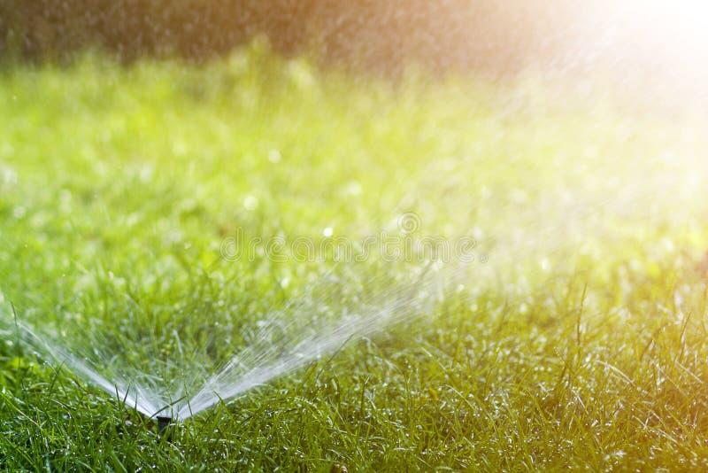 Gräsmattavattenspridare som besprutar vatten över nytt gräs för gräsmattagräsplan i trädgård eller trädgård på varm sommardag Aut royaltyfria bilder
