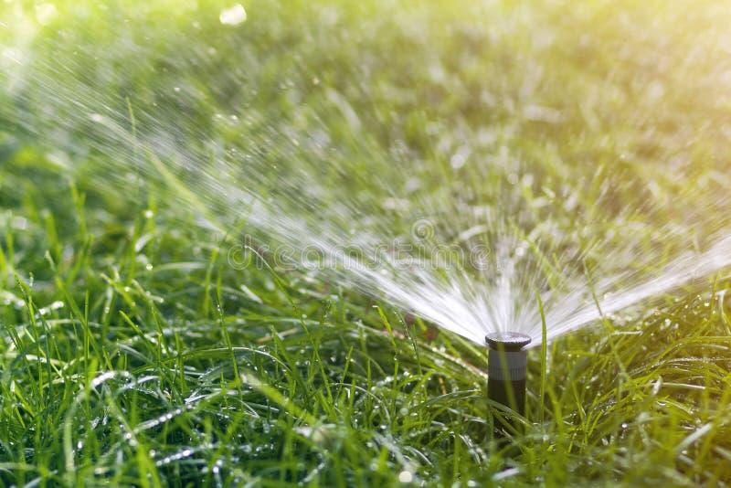 Gräsmattavattenspridare som besprutar vatten över nytt gräs för gräsmattagräsplan i trädgård eller trädgård på varm sommardag Aut arkivfoton