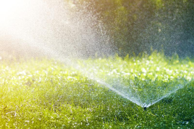 Gräsmattavattenspridare som besprutar vatten över nytt gräs för gräsmattagräsplan i trädgård eller trädgård på varm sommardag Aut arkivfoto