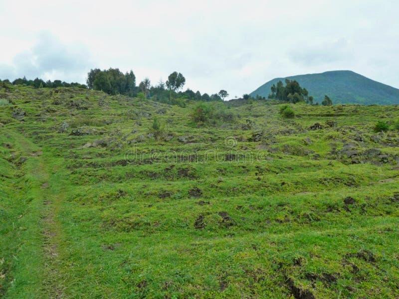 gräsmoment i en kulle i africa arkivfoton