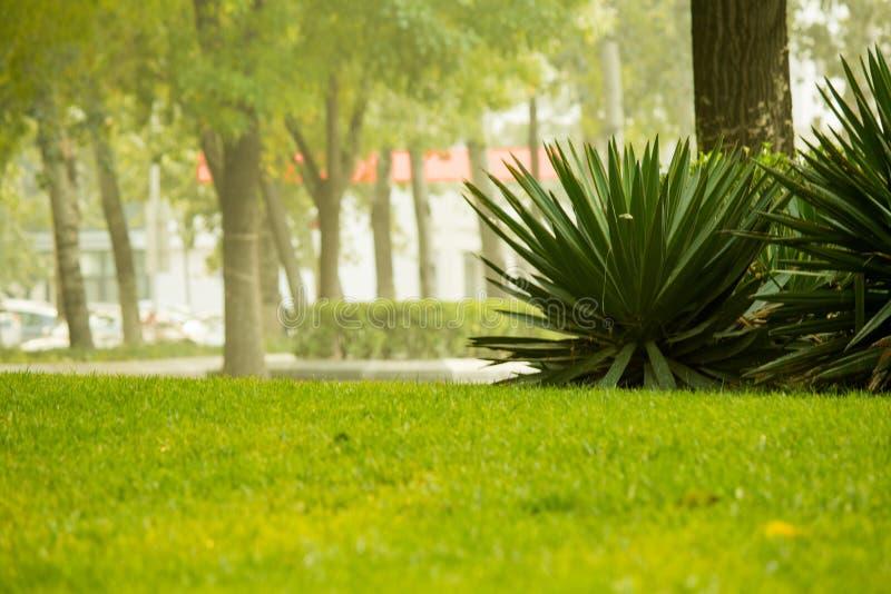 Gräsplan är en kall färg arkivbilder