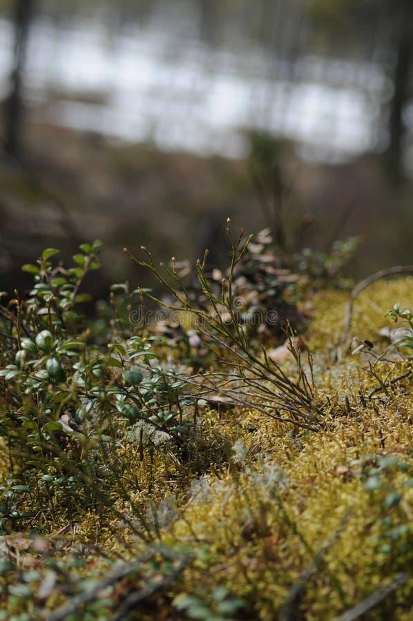 Gräsplan arkivbilder
