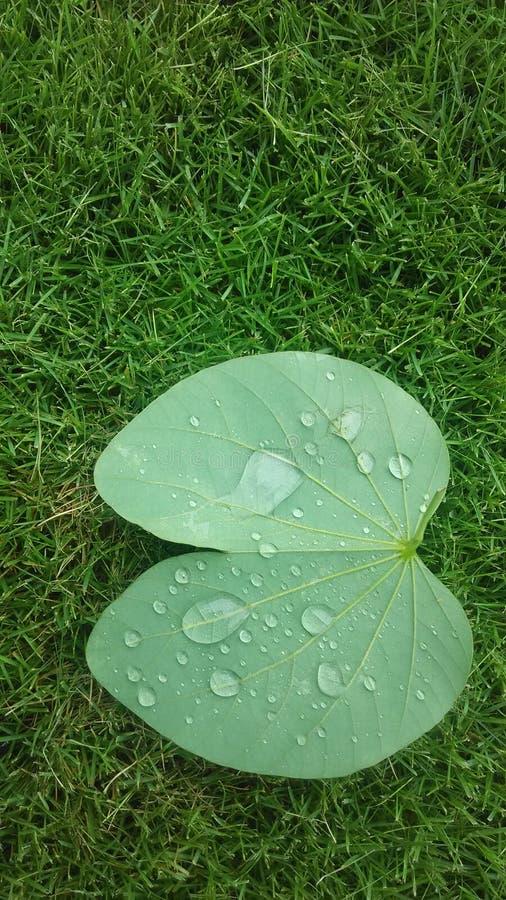 Gräsplan arkivfoto