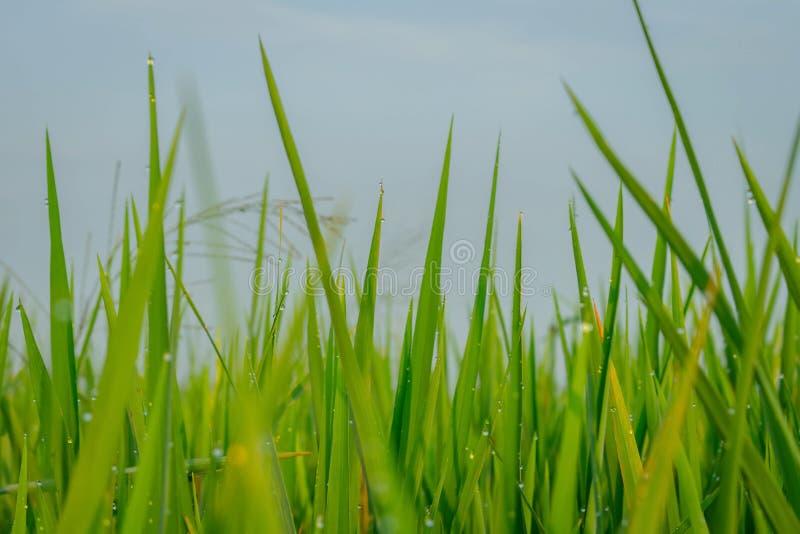 Gräsplan arkivbild