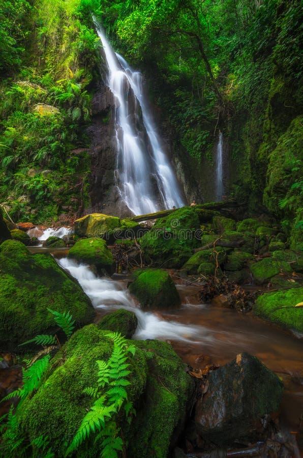 Gräsplan av vattenfallet royaltyfria foton