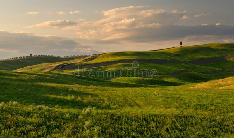 Gräsplan buktar fotografering för bildbyråer