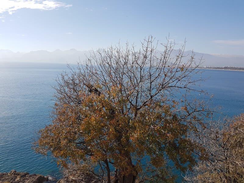 Gräsplan för träd för hav för natur för Turkiet antalya analyaferie blå royaltyfria bilder