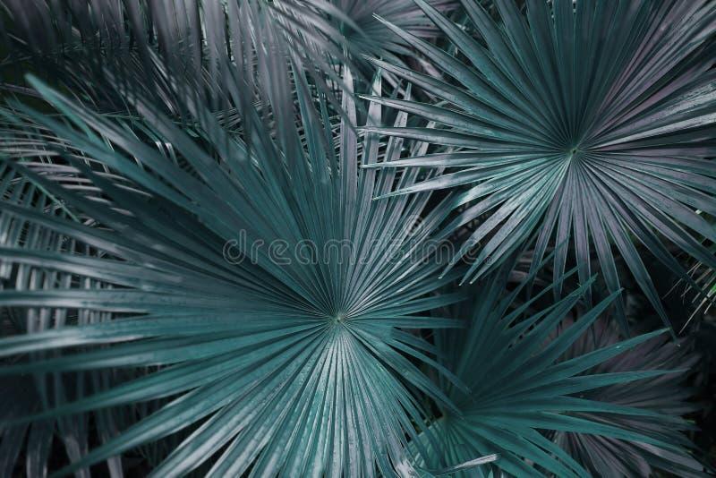 Gräsplan gömma i handflatan blad på tropisk landsfors fotografering för bildbyråer