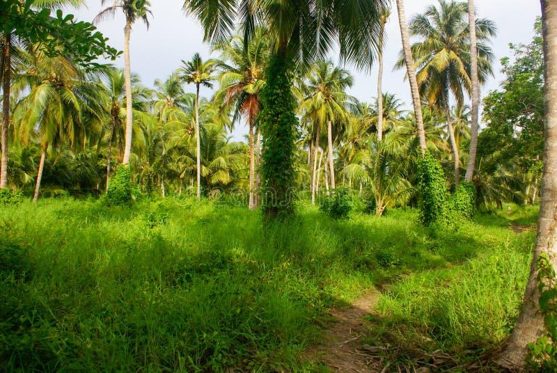 Gräsplan gömma i handflatan skogen i den colombianska ön Mucura royaltyfri bild