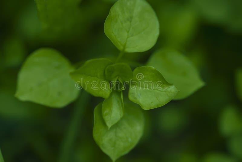gräsplan i höst fotografering för bildbyråer