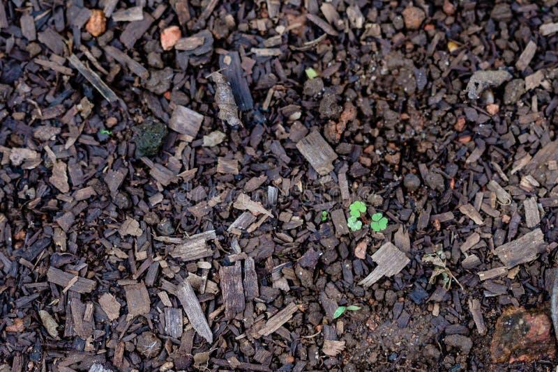 Gräsplan lämnar att växa från jorden, badas i ljus, suddighet royaltyfria bilder