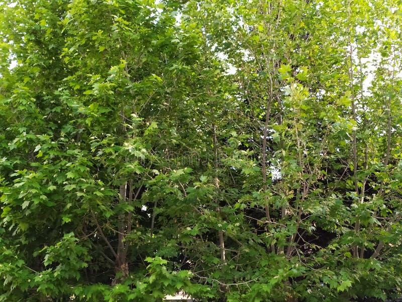 Gräsplan lämnar bakgrund - träd royaltyfri foto