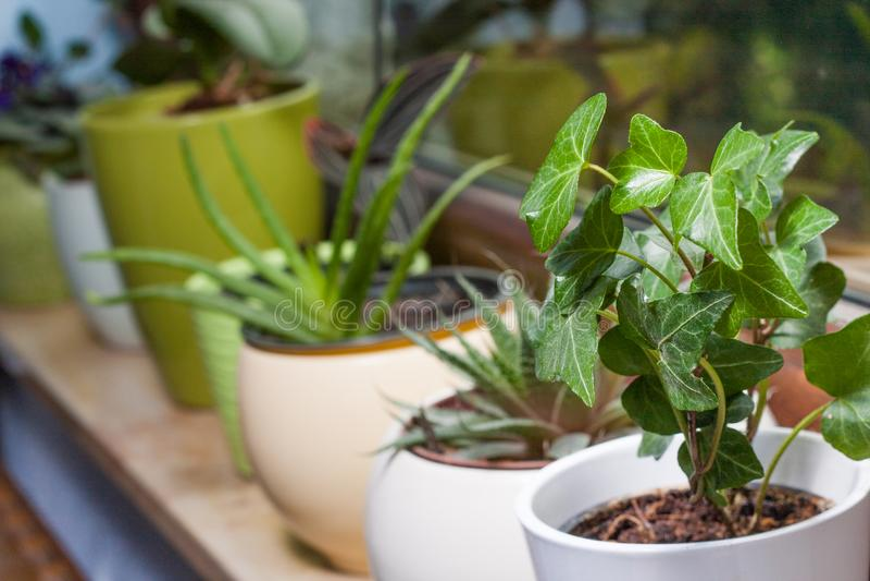 Gräsplan lade in växter på en fönsterfönsterbräda royaltyfri foto