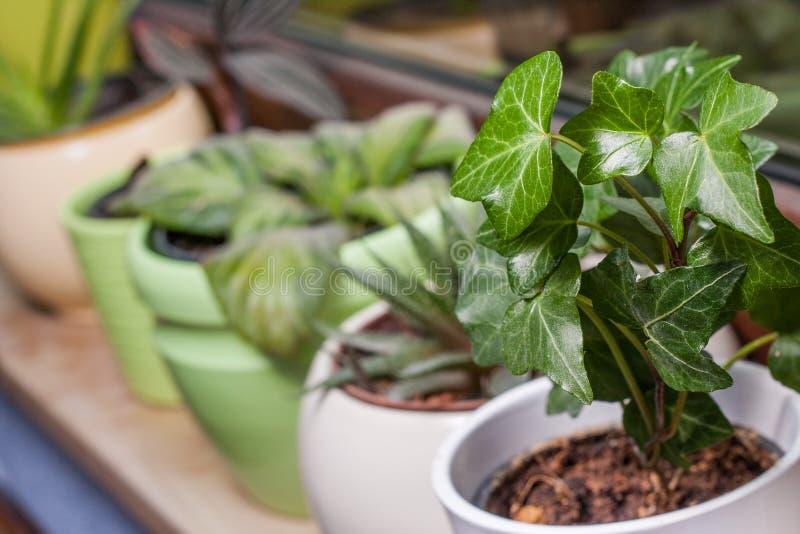Gräsplan lade in växter på en fönsterfönsterbräda royaltyfri fotografi