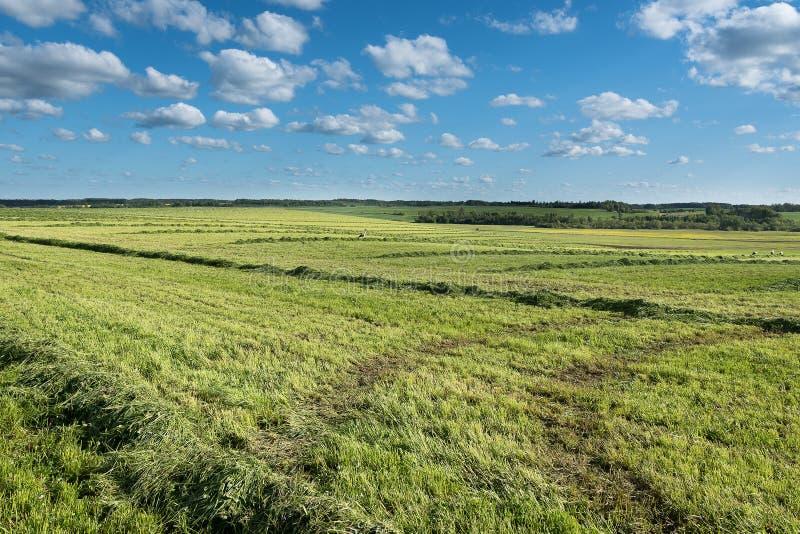 Gräsplan mejat fält royaltyfri foto