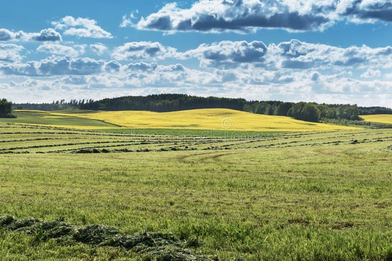 Gräsplan mejat fält royaltyfria foton